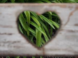 love-1333508_1920